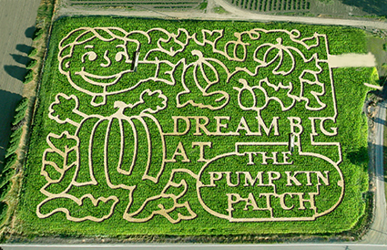 Pumpkin Patch Maze Sauvie Island